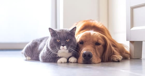 Address Your Pet In Your Estate Plan Using A Pet Trust