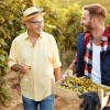 father and son working in a vineyard together