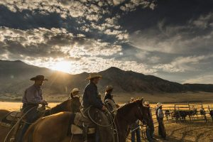 Colorado ranchers herding cattle in the early morning, Agriculture & Ranching Industry