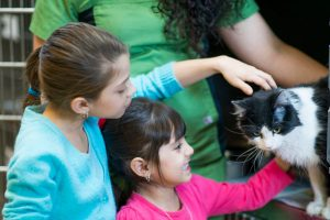 young girls at pet shelter petting cat